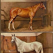 REDUCED Vintage Post Cards Artist Signed Thoroughbred Horses (3)