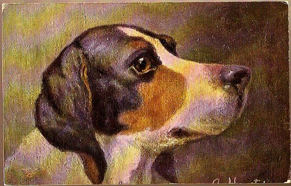 Vintage Post Card Art Hunting Hound Dog