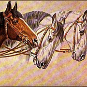 Vintage Post Card Art Three Bridled Horses