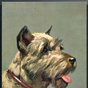 Vintage Post Card Artist Signed Schnauzer Dog