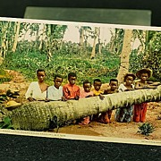Early Black Americana Postcard �Eight Pickaninnies Kneeling in a Row�