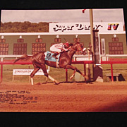 Sunny's Halo 1983 Derby Winner's Original Vintage Photo w stats Louisiana Downs Super ...
