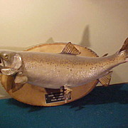 "Vintage 25"" Taxidermied Lake Ontario Salmon-Needs TLC"