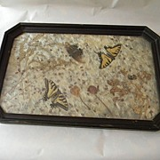 Butterflies Under Glass Serving Tray with Wood Frame
