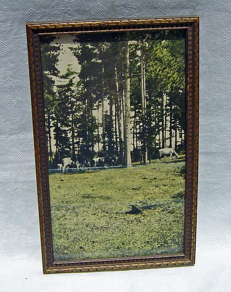 Vintage Cows Grazing In Field Tinted Photograph In Old Wooden Frame Picture