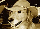 Happy Hound Antiques & Collectibles