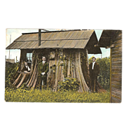 "Postcard of ""Cedar Stumps Puget Sound Wash"""