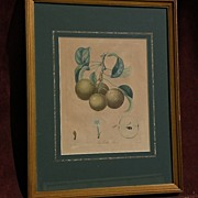 French 18th/19th century botanical illustration engraved hand colored print by noted ...