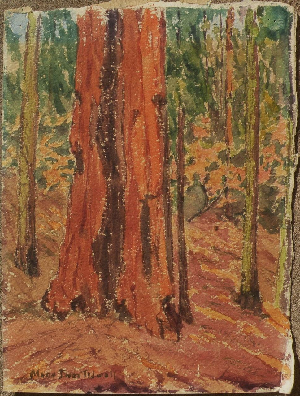 Redwood Tree Painting Circa 1935 watercolor paintingRedwood Tree Painting