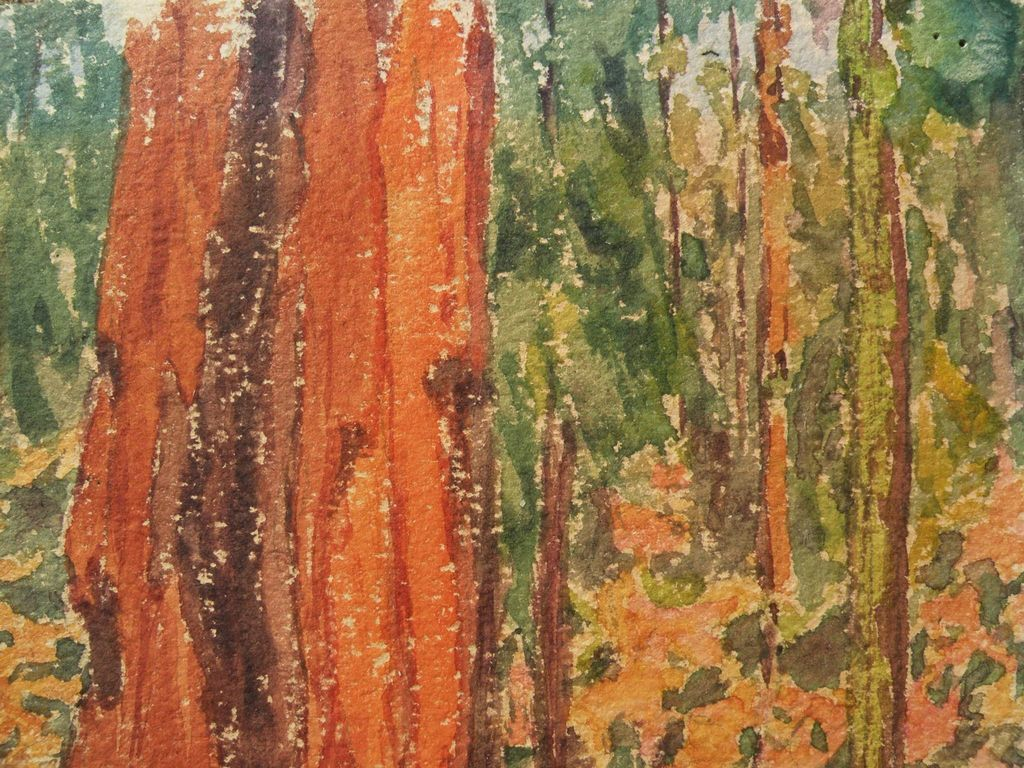 Redwood Tree Painting Watercolor on paper paintingRedwood Tree Painting