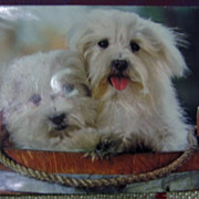 Pair of Fluffy White Pups Squeak Postcard Printed in Japan
