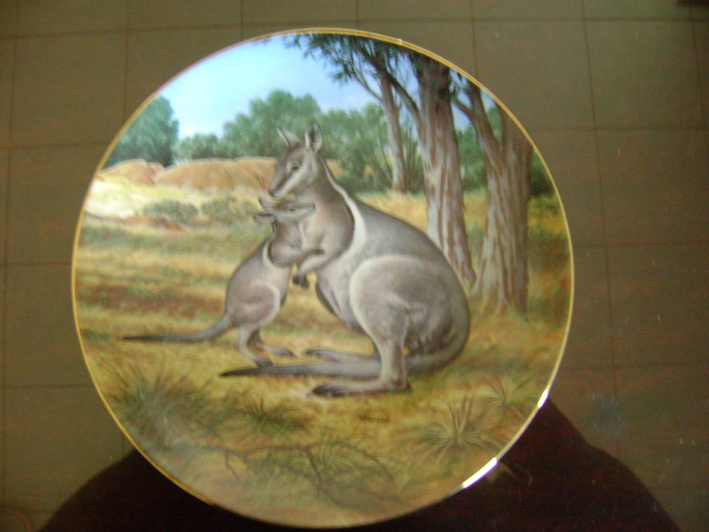 The Brindled Wallaby The Last of Their Kind The Endangered Species