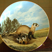 The Black Footed Ferret The Last of Their Kind The Endangered Species