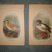 Pair of Duck Prints  c.1890
