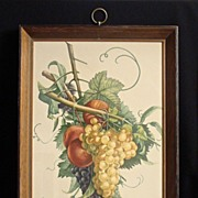 "Jean Louis Prevost ""Chasfelas, Muscat et Peches"", No. 2 Hand Colored Art Gravure Bot"