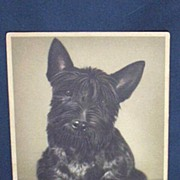 SALE Vintage Scotch Terrier Postcard...Alfred Mainzer...Belgium