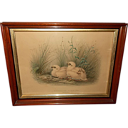 Montagu's Harrier Nestlings Litho by Edward Neale - Walnut Frame
