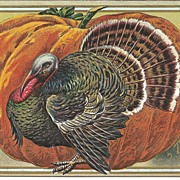 POST CARD, Big Ole Tom Turkey With a Pumpkin, Thanksgiving Greetings