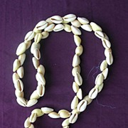 Beautiful Vintage Cowrie Shell Necklace From Papua New Guinea