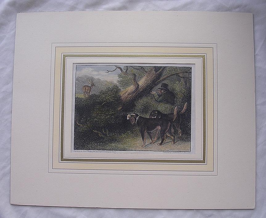 1823 Hand Coloured Engraving 'BLOOD HOUNDS'