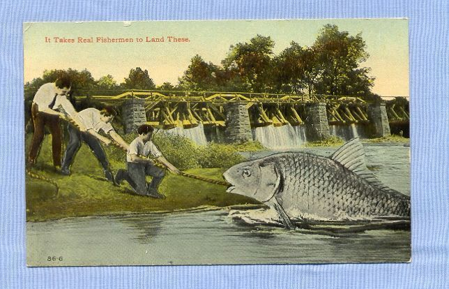 Takes Three Men to Haul in a Giant Fish - Comic Postcard, 1913