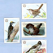Arm & Hammer Trade Cards � Useful Birds of America Series