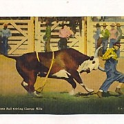 Rodeo Postcard with Brahma Bull Chasing Clown, 1940s