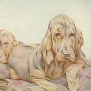 Print: Bloodhound Puppies: Julius Detmold