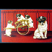 Adorable Embossed Dogs in Cart Vintage Post Card