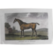 Lithograph Print of John Scott engraving of horse &quot; Whiskey Got By Saltram&quot; from 1798 : circa 1872