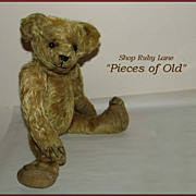 "Ideal ""Sweet Look"" Antique Teddy Bear c.1905"