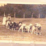 Vintage Eskimo Sled Team Ed Clark's Dog Ranch Woodstock N. H. Postcard