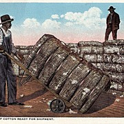 Black Americana Postcard Bales Of Cotton Ready For Shipment