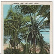 Coconut Trees Fort Myers Florida FL Postcard