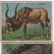 Two Hassan Cork Tip Cigarettes Trade Cards Addax Hippo