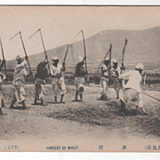 Harvest (Harvert) of Wheat Japanese Vintage Postcard