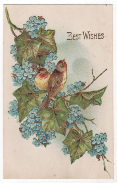"Greetings Postcard ""Best Wishes"" Birds Blue Flowers"