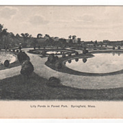 Lily Ponds in Forest Park Springfield MA Massachusetts Postcard