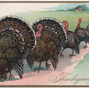 Thanksgiving Vintage Postcard Long Parade of Turkeys both Gobblers and Hens Tuck