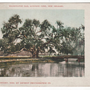DPC Washington Oak Audubon Park New Orleans LA Louisiana Vintage Postcard