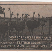 Advertising Visit Los Angeles Ostrich Farm and Store Vintage Postcard