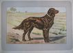 �Dogs, Wild Game and Enemies� by P. Mahler - 180 prints from 1907