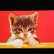 Vintage Color Postcard Of Sweet Little Kitten Circa 1950s