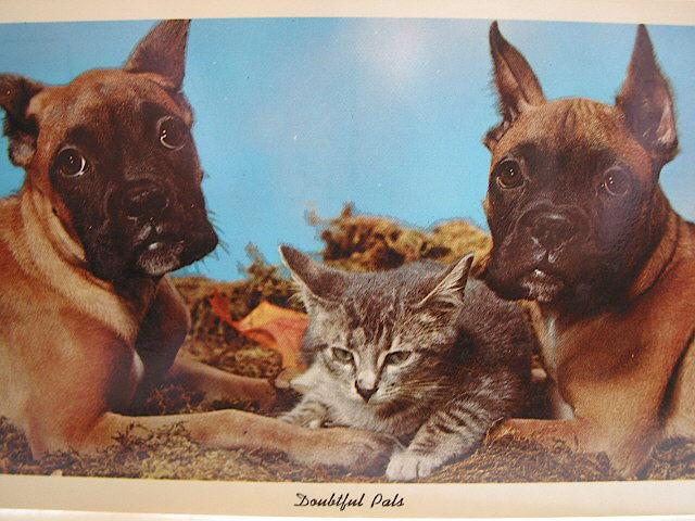 Vintage &quot;Doubtful Pals&quot; Curteichcolor Postcard Circa 1960s