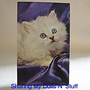 Vintage Postcard Of Long Haired White Kitten Circa 1960s
