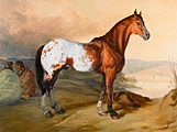 Appaloosa Antiques