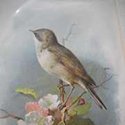 Archibald Thorburn Bird Prints