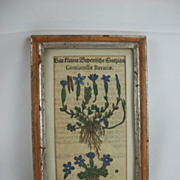 Framed Book / Manuscript Remnant from 1500s, Gentian Plant