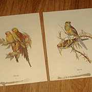 SOLD Vintage pair of John Gould Parakeet Bird prints  608 & 606 Circa 1940&quot;s