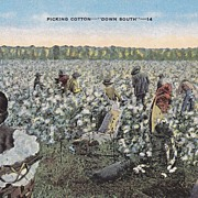 "Vintage Black Americana ""Down South"" Postcard - Picking Cotton"